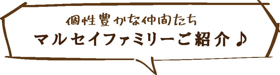 個性豊かな仲間たち マルセイファミリーご紹介♪