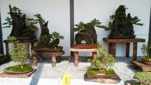 姫路城盆栽